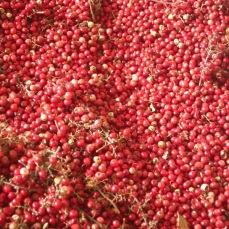 Grains de poivre (aroieira)