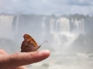 Les nombreux papillons