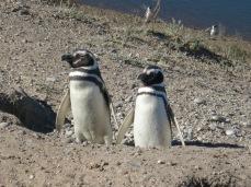 """""""Le pingouin, c'est le seul être vivant sur Terre à être né avec un costard."""" Johanna Hawken, philosophe"""