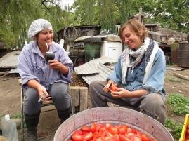 Lucy et Caroline coupent les tomates