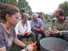 Préparation des tomates pour la sauce