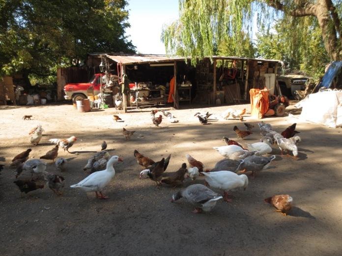 Au centre de la ferme
