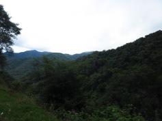 La yunga sur la route d'El Carmen