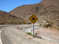 Attention aux lamas