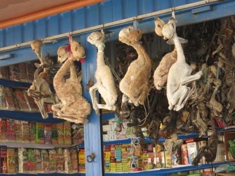 On vend de tout au marché aux sorcières, même des bébés lamas ou des foetus d'animaux