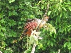 L'oiseau Serere qui donne son nom à la réserve Serere