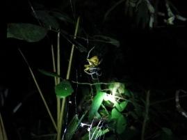 Une araignée dégustant son dîner