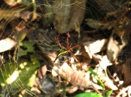 Une araignée et sa toile