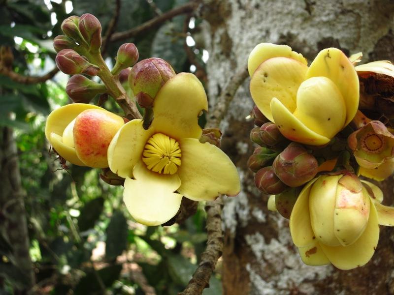Fleurs D Avocats Reperages