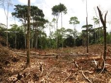 Les joies de la déforestation