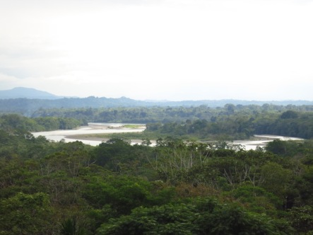 Vue sur le Rio Napo