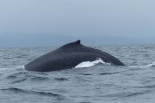 Une grosse baleine