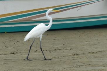 Sorte d'ibis