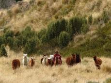 Gardien de troupeau