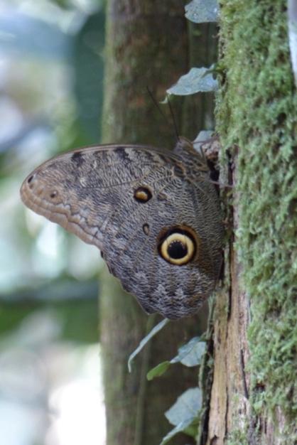 Papillon le plus grand du monde