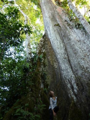 Anouk et l'arbre géant, avant la piqûre de conga!