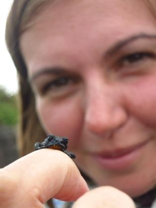 Caroline et l'Oreophrynella nigra, grenouille endémique du Roraima